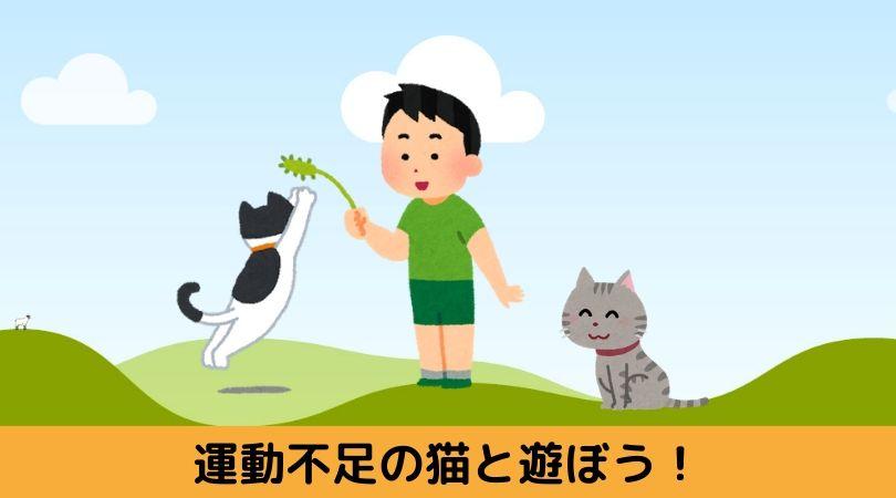 運動不足の猫と遊ぼうアイキャッチ